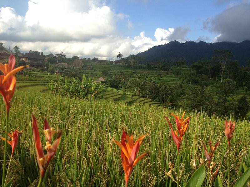 Сидемен, Бали.